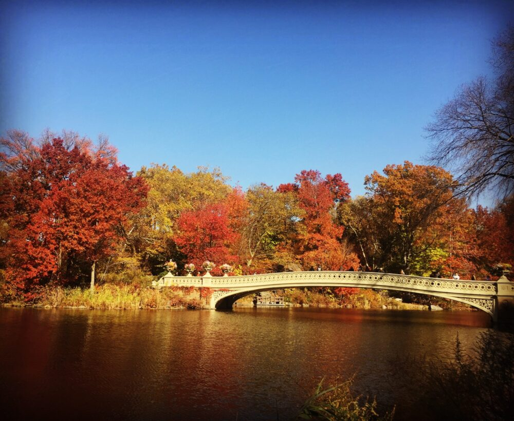 Things To Do In NYC In November & Weather